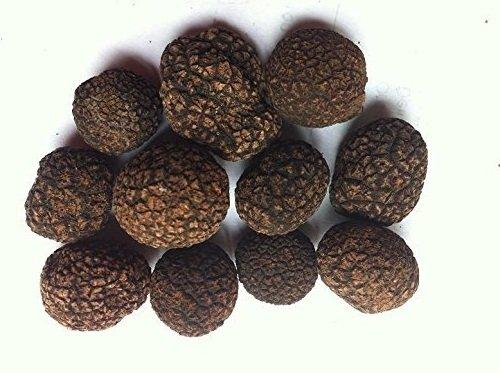 1-libra-454-gramos-Famosa-Himalaya-negro-Trufa-entera-seca-en-tarro-0