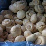 1-libra-454-gramos-champin-secado-hongo-Premium-grado-de-Yunnan-China—0-1