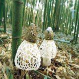 2-libra-908-gramos-de-hongos-naturales-de-bamb-hongos-secos-de-Yunnan-China—0-2